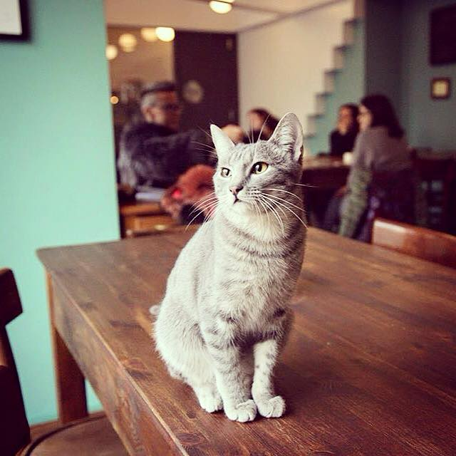 Crazy cat Cafe - Matcha Cafè Milano